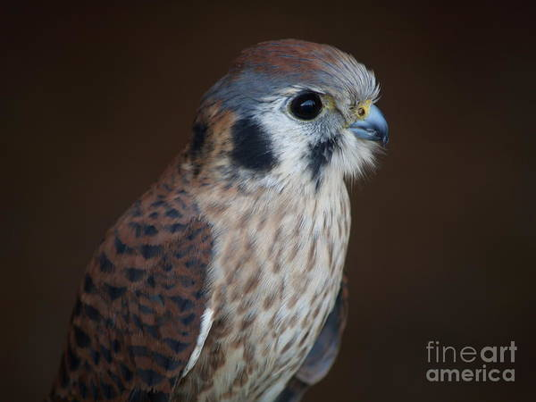 Photograph - Blue Beak by Robin Maria Pedrero