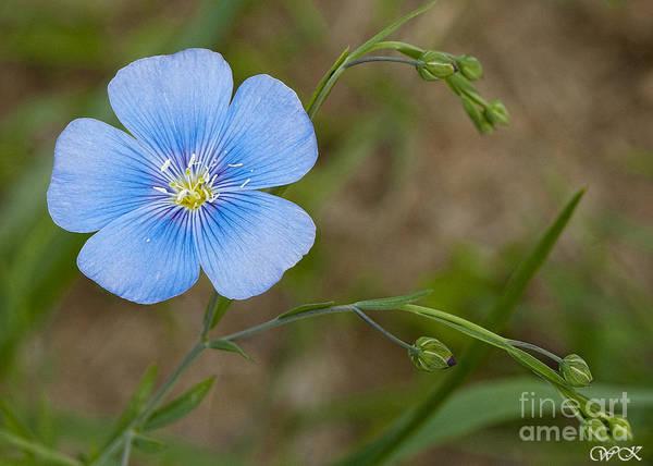 Photograph - Blue Beaury by Wanda Krack