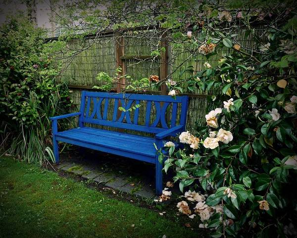 Photograph - Blue Bench With Roses by Patricia Strand