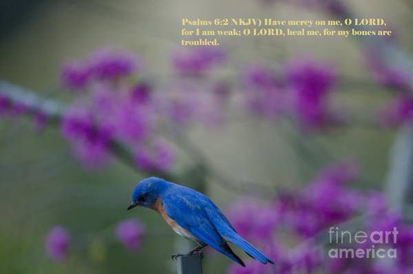 Photograph - Blue Bird Praying by Dale Powell