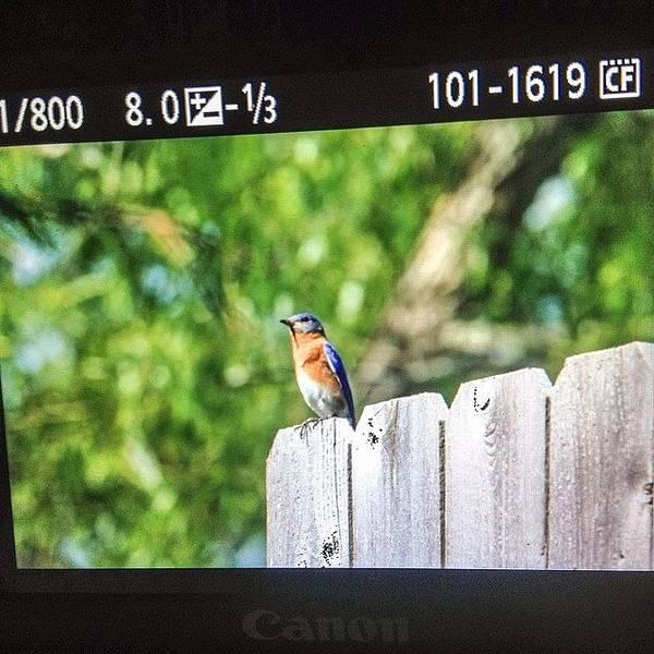 Wall Art - Photograph - Blue Bird Shooting #iphone5 #instagram by Scott Pellegrin