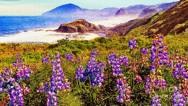 Photograph - Blue Bonnets On Oregon Coastline by Bob and Nadine Johnston