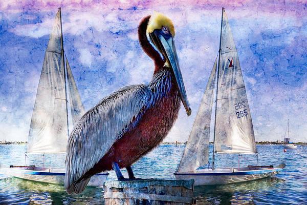 Singer Island Photograph - Blue Boy by Debra and Dave Vanderlaan
