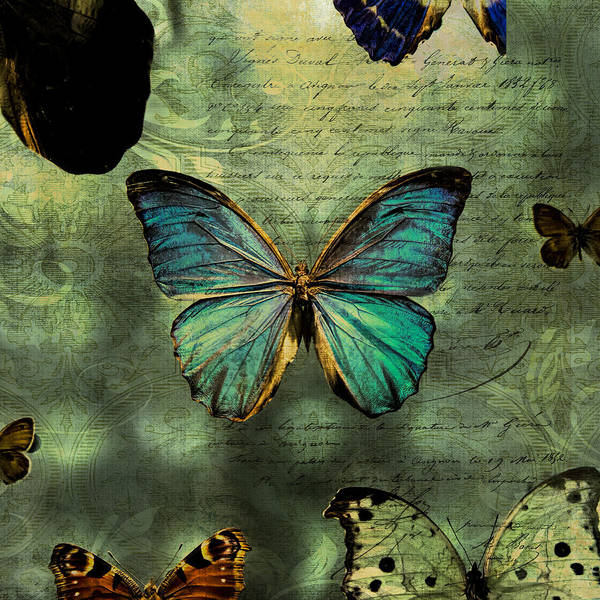 Photograph - Blue Butterfly by Evie Carrier