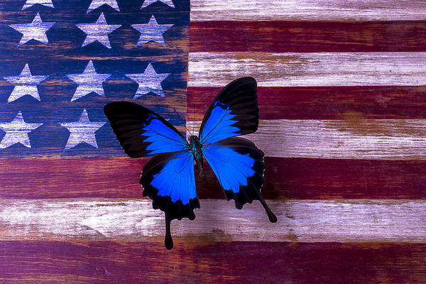 Gay Flag Photograph - Blue Butterfly On American Flag by Garry Gay