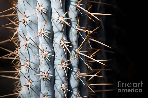Art Print featuring the photograph Blue Cactus by John Wadleigh