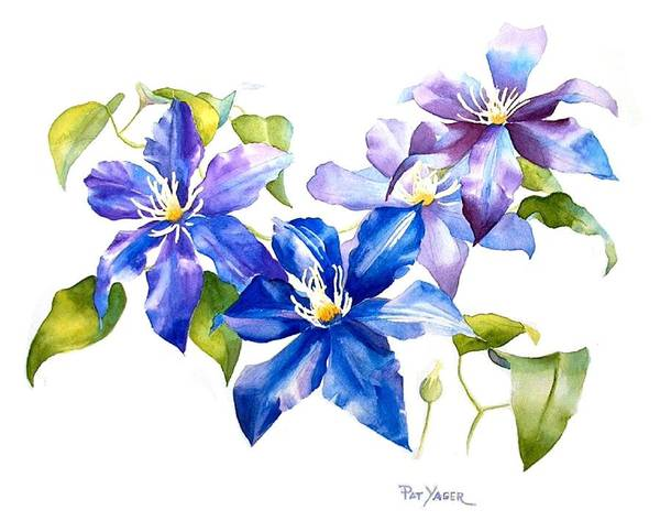 Wall Art - Painting - Blue Clematis by Pat Yager