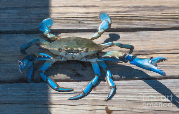 Photograph - Blue Crab Madness by Dale Powell
