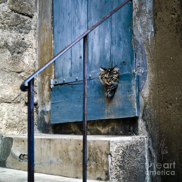 Photograph - Blue Door With Pet Outlook by Heiko Koehrer-Wagner