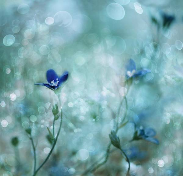 Blue Flower Photograph - Blue Dream Land by Delphine Devos