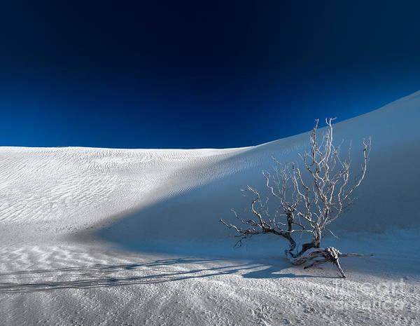 Photograph - Blue Dusk Desert by Julian Cook