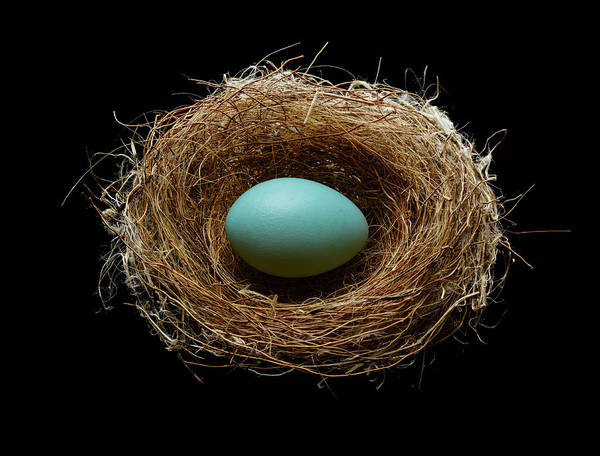 Birds Eggs Photograph - Blue Egg In A Nest by Don Farrall