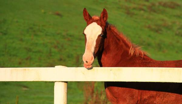 Berlin Ohio Photograph - Blue Eyed Horse by Dan Sproul