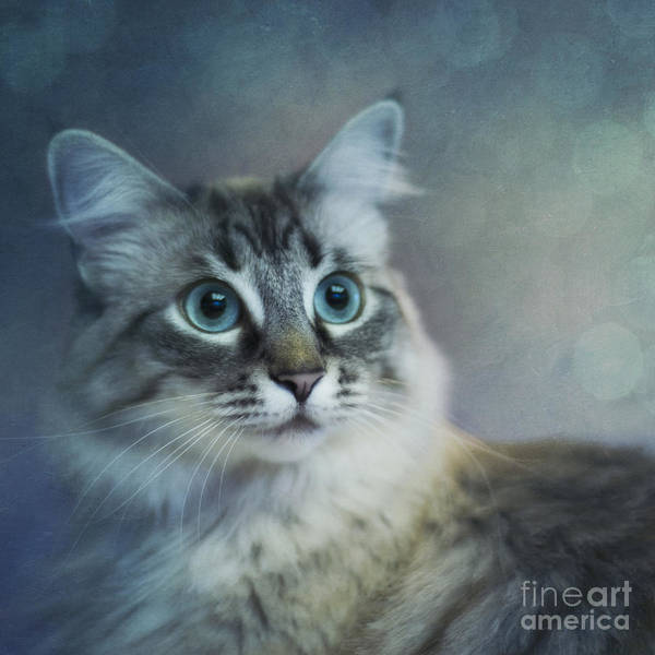 Wall Art - Photograph - Blue Eyed Queen by Priska Wettstein