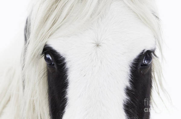 Wall Art - Photograph - Blue Eyes by Carol Walker