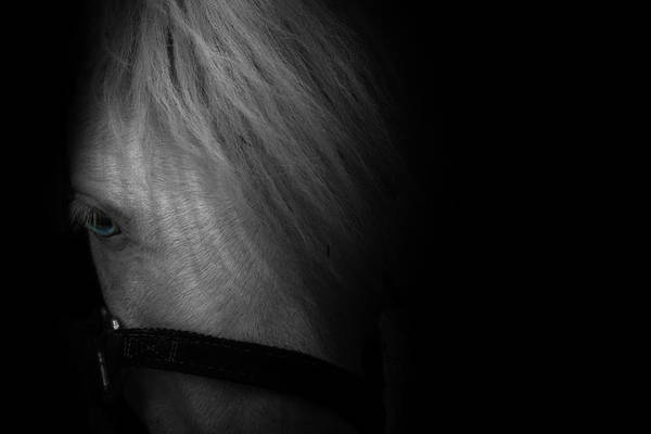 White Horse Photograph - Blue Eyes by Shane Holsclaw