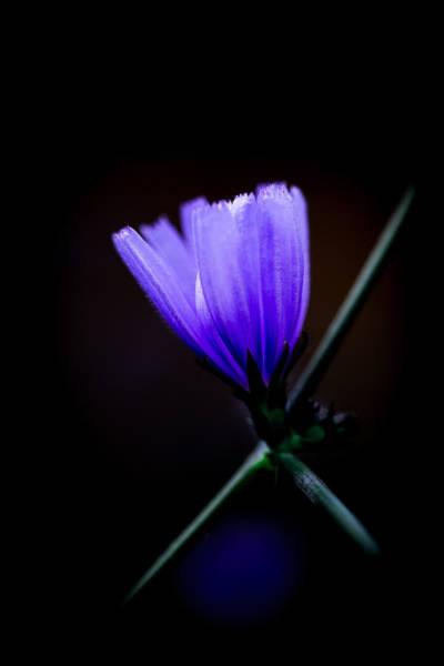 Photograph - Blue Flame by Edgar Laureano