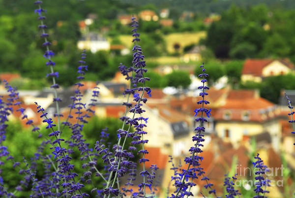 Red Roof Photograph - Blue Flowers And Rooftops In Sarlat by Elena Elisseeva