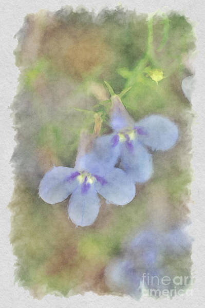 Photograph - Blue Flowers by Dan Friend