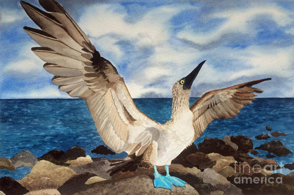 Boobies Painting - Blue-footed Booby by Katie Schneider