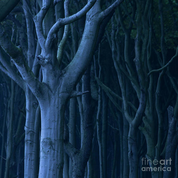 Photograph - Blue Forest by Heiko Koehrer-Wagner