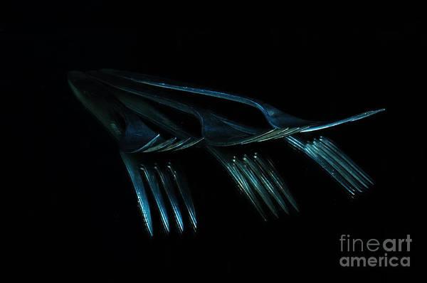 Photograph - Blue Forks by Randi Grace Nilsberg
