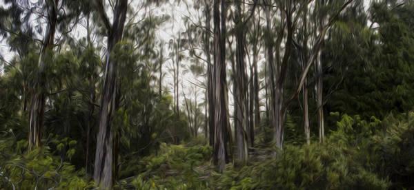 Photograph - Blue Gum Eucalyptus Forest by Brad Scott
