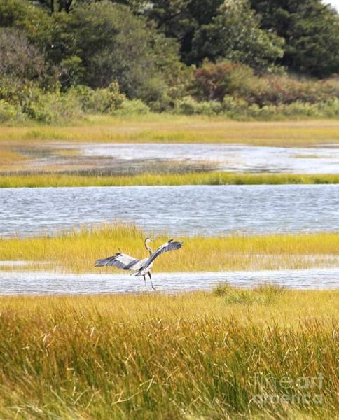 Photograph - Great Blue Heron by Jim Gillen