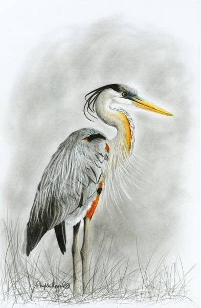 Drawing - Blue Heron 3 by Phyllis Howard