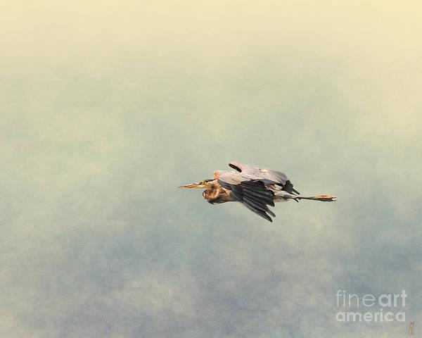 Photograph - Blue Heron In Flight 2 by Jai Johnson