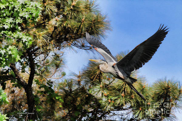 Photograph - Blue Heron In The Trees Oil by Deborah Benoit