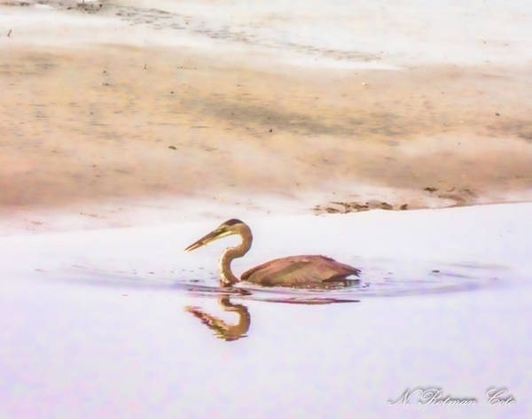 Photograph - Blue Heron With Fish by Natalie Rotman Cote