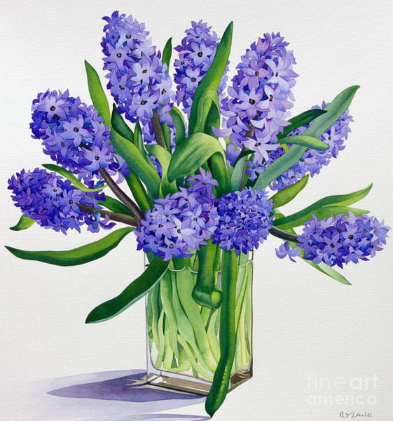Wall Art - Painting - Blue Hyacinths by Christopher Ryland