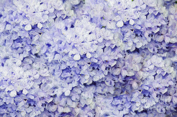 Photograph - Blue Hydrangea Painterly by Andee Design