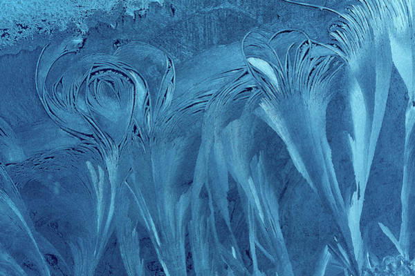 Natural Elements Photograph - Blue Ice Flower Background by Mammuth