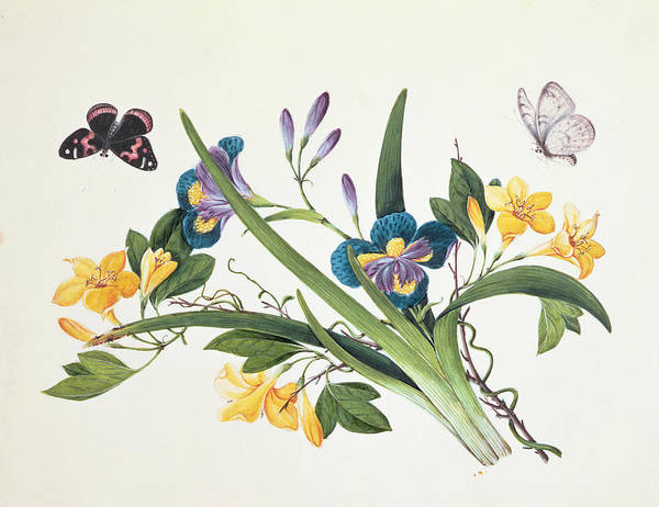 Butterfly Drawing - Blue Iris And Insects by Chinese School