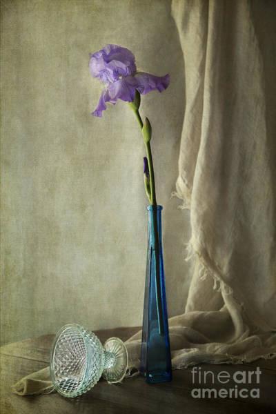 Photograph - Blue Iris by Elena Nosyreva