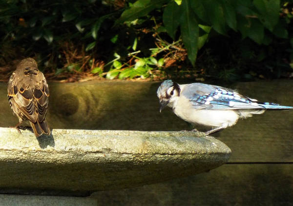 Wall Art - Photograph - Blue Jay Hello by Lisa Roy