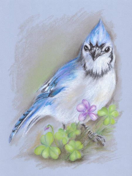 Pastel - Blue Jay In Spring With Oxalis by MM Anderson