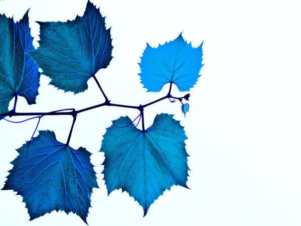 Photograph - Blue by Jim DeLillo