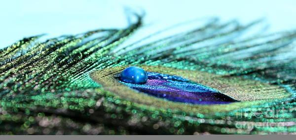 Peacock Photograph - Blue by Krissy Katsimbras
