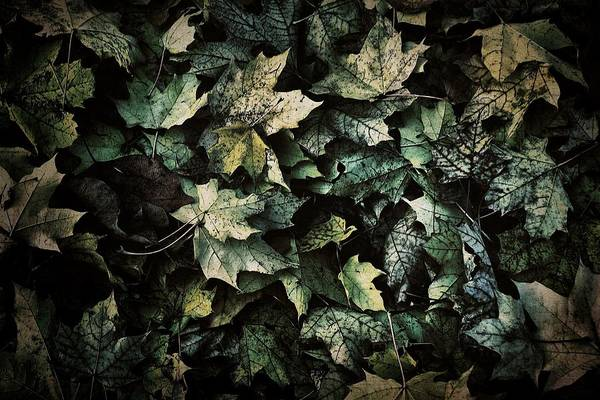 Photograph - Blue Leaves by Patricia Strand