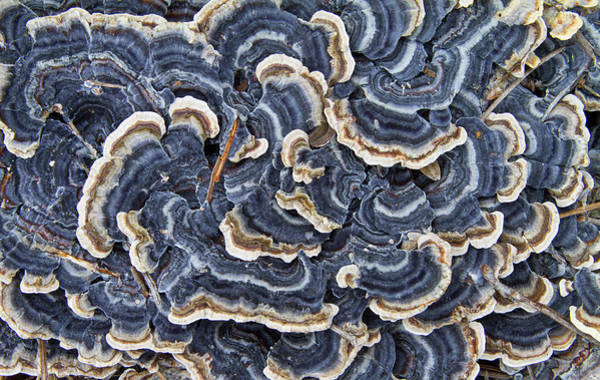 South Carolina Photograph - Blue Lichens by Glenn Ross Images