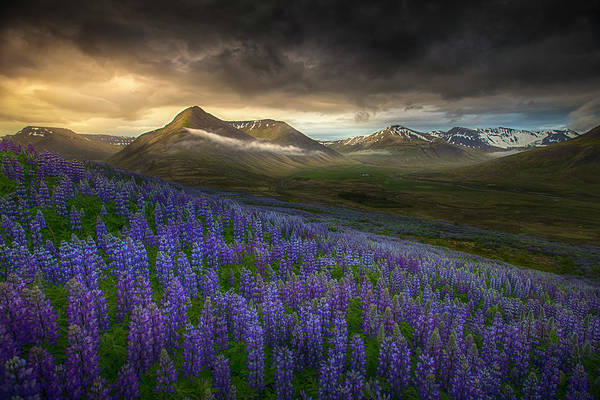 Wildflowers Photograph - Blue Meadows by Peter Svoboda, Mqep