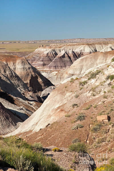 Photograph - Blue Mesa Petrified Forest National Park by Fred Stearns