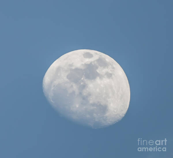 Photograph - Blue Moon by Dale Powell