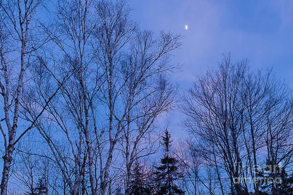 Photograph - Blue Moon by Susan Cole Kelly