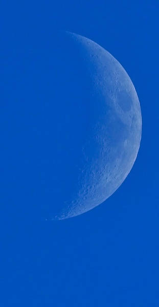 Photograph - Blue Moon by William Jobes