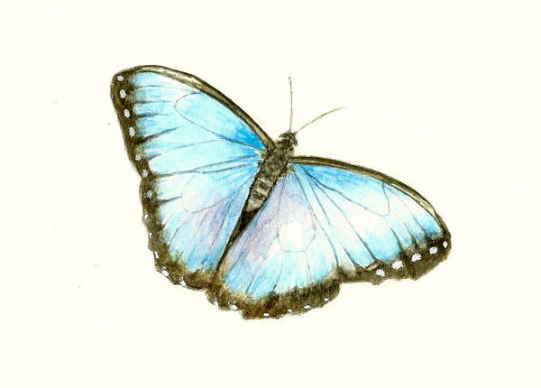 Wall Art - Painting - Blue Morpho Butterfly by Michael Vigliotti