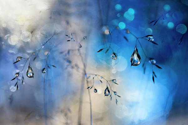Drop Photograph - Blue Rain by Heidi Westum